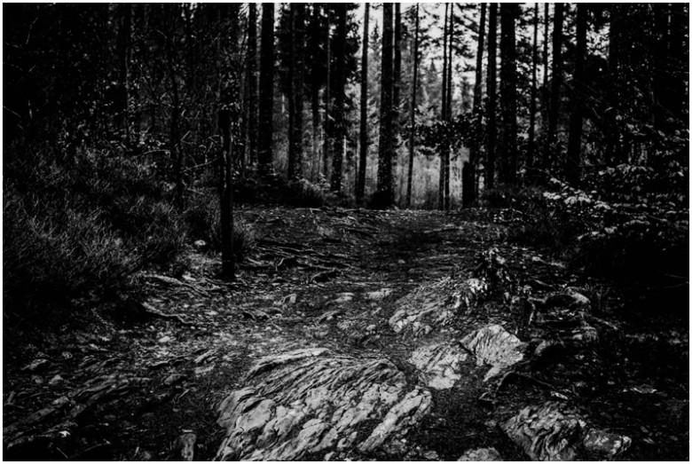 scottish forest landscape